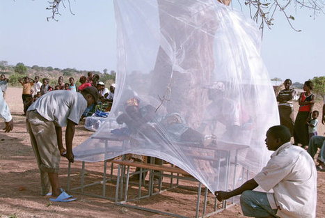 Climate change 'could raise malaria risk in cool areas' | Environment, Energy and Climate | Scoop.it