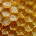 Raw Honey and Its Powers on Restoring and Maintaining Good Health | Prevent or minimize the risks of illness | Scoop.it
