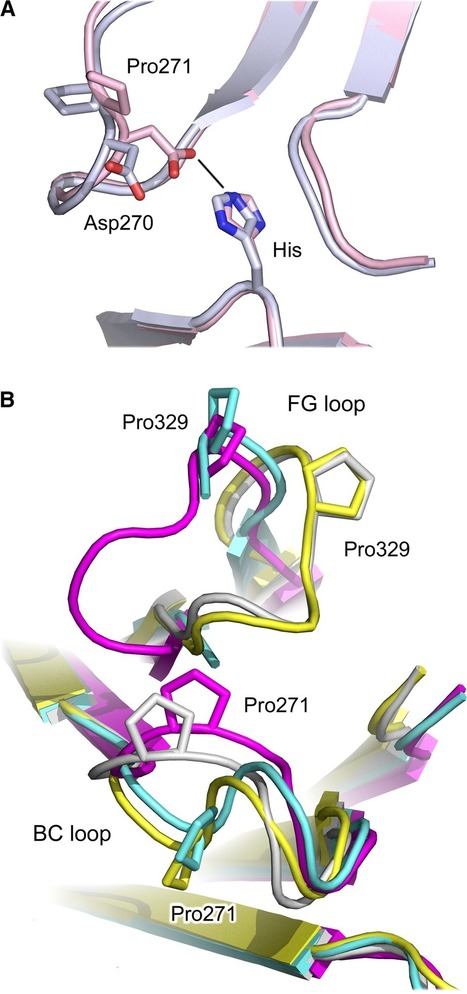 Human IgG4: a structural perspective - Davies - 2015 - Immunological Reviews - Wiley Online Library | Top Selling Monoclonal Antibodies 2014 | Scoop.it