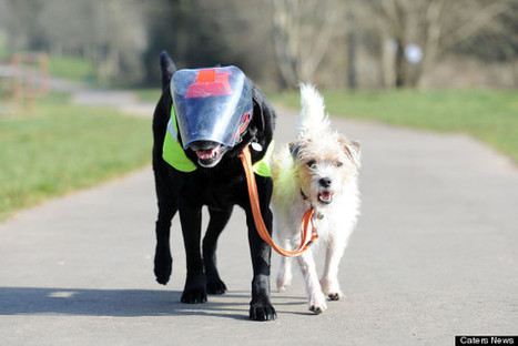 Dog Blindness or Impaired Vision | Dog Traning | Scoop.it