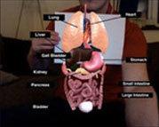 Learn AR  Web con programas de realidad aumentada para el aprendizaje de diferentes materias | Realidad aumentada aplicada a la educación | Scoop.it