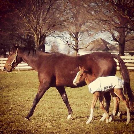 Foals of 2013 | Horse Lovers | Scoop.it