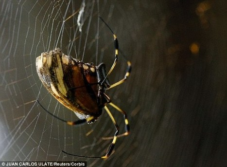 Rothamsted mention: Can spiders COUNT? Arachnids keep track of prey in their webs | BIOSCIENCE NEWS | Scoop.it