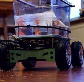 Goldfish Takes Self-Driving Tank For a Spin - NBCNews.com (blog) | SA Scuba Shack | Scoop.it