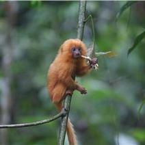 «Σε εξέλιξη» η έκτη μαζική εξαφάνιση ειδών στον πλανήτη Γη   ΔΙΑΧΕΙΡΙΣΗ ΦΥΣΙΚΩΝ ΠΟΡΩΝ - ADMINISTRATION  OF NATURAL RESOURCES   Scoop.it