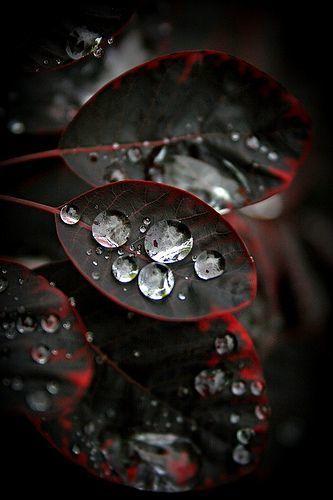 Waterdrops | Esmeralda | Scoop.it