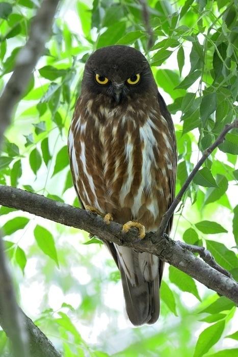 Katerniaghat Wildlife Sanctuary - Explore Beauty of Flora & Fauna | Ranthambore Jeep Safari | Scoop.it