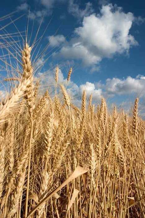 Crop Failure and Fading Food Supplies: Climate Change's Lasting Impact (Op-Ed) | Agriculture news & innovations | Scoop.it