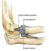 Dr. Jeffrey E. Budoff: What Are Elbow Ligament Injuries, Tennis Elbow and Golfers Elbow?   Health & Wellness   Scoop.it