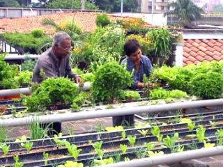 Sagarpa contribuye a proyecto de azoteas verdes | Sexenio | Jardines Verticales y azoteas verdes. | Scoop.it