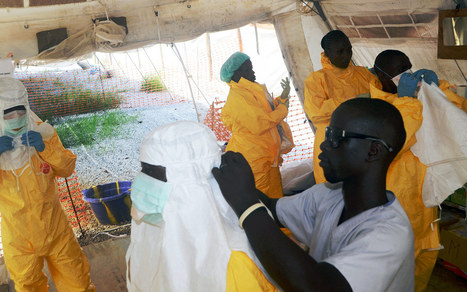UN warns West Africans to stay away from fruit bats as Ebola spreads - Al Jazeera America | Bat Biology and Ecology | Scoop.it