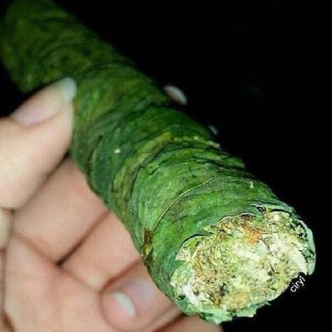 Blunt Porn on Twitter | Cannabisclub | Scoop.it