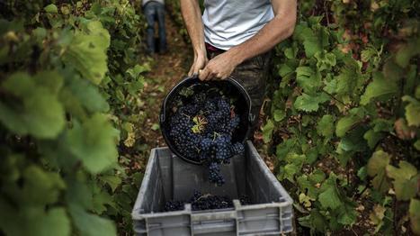Les vignerons français voient rouge contre l'Icann, le régulateur du net | L'Air du Temps | Scoop.it