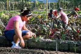Promueven en Cuba programa de agricultura familiar - Radio Cadena Agramonte (blog) | El cultivo de gladiolos | Scoop.it