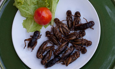 Insects could be the planet's next food source... even if that gives you the creeps | Geography Bits | Scoop.it
