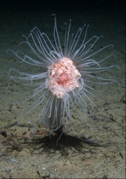 Major reductions in seafloor marine life from climate change by 2100   Sustain Our Earth   Scoop.it