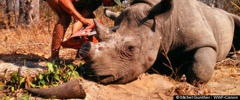 How Criminology Might Help Fight Poaching   Wildlife Trafficking: Who Does it? Allows it?   Scoop.it