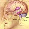 Veille scientifique Neuroscience