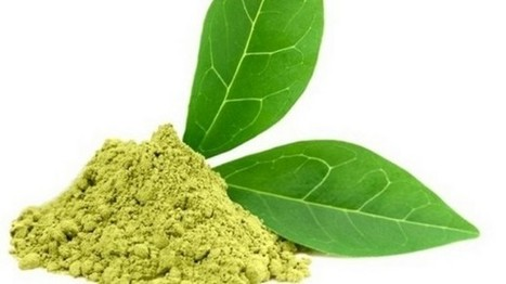 Link of green tea extracts to liver injury raises age old question: How much of a good thing is too much? | Erba Volant - Applied Plant Science | Scoop.it