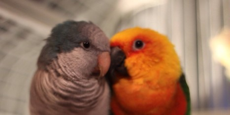 Madly In Love Bird Couple Will Teach You A Thing Or Two About Relationships - Huffington Post | car repyr auto | Scoop.it