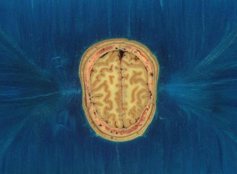 Brain Science - National Geographic | science findings | Scoop.it