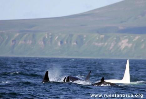 Ils ont vu Moby Dick, c'est un mâle | Merveilles - Marvels | Scoop.it