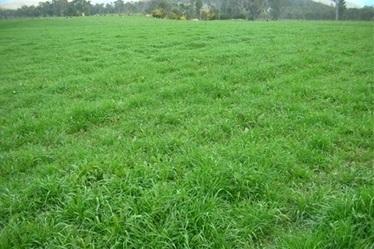 Case Study: Grasslands back in the West   Temperate Grassland   Scoop.it