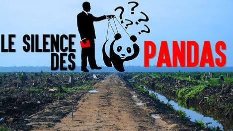 Le silence des pandas : ce que le WWF ne vous dira pas | C koa le DD | Scoop.it