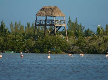 Científicos advierten sobre consecuencia de destrucción de manglares | Noticias CTM (tercera evaluación) | Scoop.it