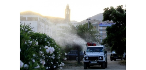 Cinq nouveaux cas de Xylella fastidiosa en Corse, annonce le préfet | Toxique, soyons vigilant ! | Scoop.it