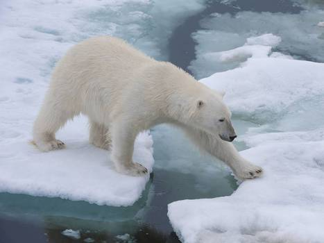 Scientists '95 per cent certain' that climate change is man-made-HCCC | World at Risk | Scoop.it