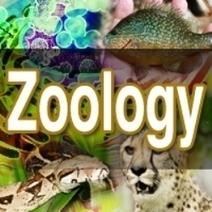 M Sc | Zoology | Distance Education | VMU | India | Distance Education Institute | Scoop.it