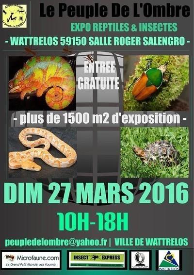 Exposition gratuite reptiles et insectes | Mon Scoop.it du week-end | Scoop.it