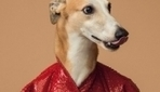 Greyhounds Turn Stylish Models In An Italian Fashion House Photoshoot - DesignTAXI.com | Around the world in 80 snippets | Scoop.it