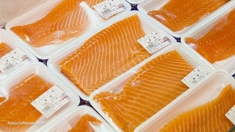 Caught Salmon, near Seattle, tested positive for 80 different drugs | Aquaculture Directory | Aquaculture Directory | Scoop.it