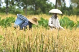 IRI to develop climate adaptation tools to help farmers in South and Southeast Asia – State of the Planet | Climate Change Adaptation in Southeast Asia | Scoop.it