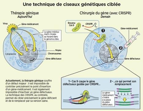 CRISPR/Cas9 : la révolution de la chirurgie du gène | EntomoScience | Scoop.it