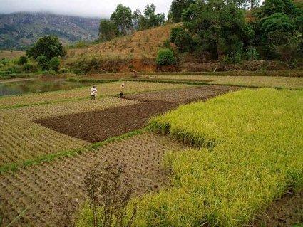 34 pays menacés par une crise alimentaire - Monde - Témoignages.RE - Malgré une production record de céréales | Future culture | Scoop.it