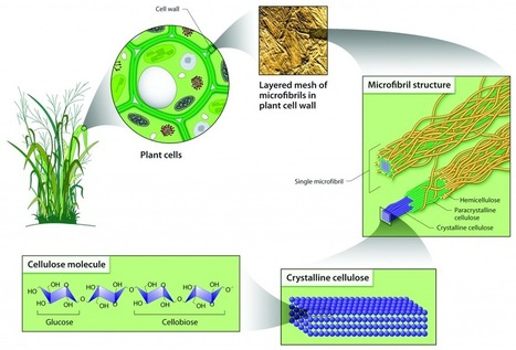 """Cellulose"" a promising material for 3D Food Printing. 