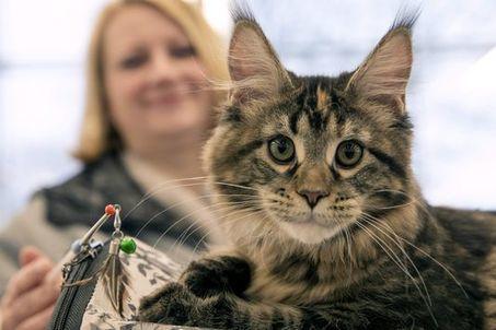 Les animaux sont désormais officiellement « doués de sensibilité » | Actualité - Information - Documentation - Culture | Scoop.it