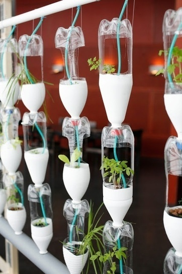 Aquaponics Favorites | Agriculture,Urban Farming,Food security,Agriprenuership, Youth, Ag Journalism and  Online Ag media | Scoop.it