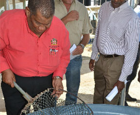 New multimillion silver tilapia project to boost aquaculture industry - FIS | Tilapia | Scoop.it