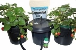 2 Pot Vegetable Growing Kit | Hydroponic Xpress | Scoop.it