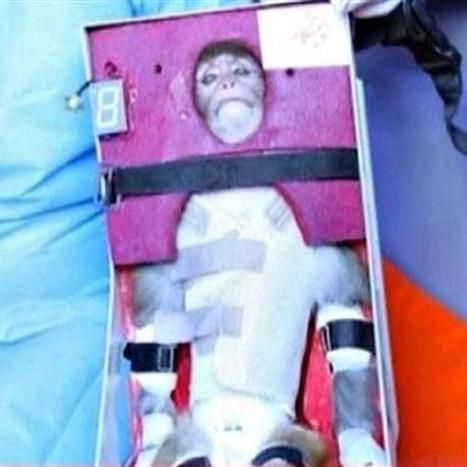 Iran launches monkey into space, showing missile progress | Navy Sitrep | Scoop.it