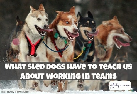 What-sled-dogs-can-teach-us-about-working-in-groups | giftedguru.com | 6th Grade Iditarod | Scoop.it