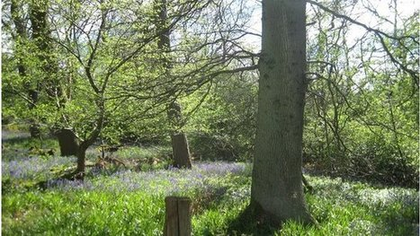 Signs of spring 'shifting' in trees   Forestry   Scoop.it