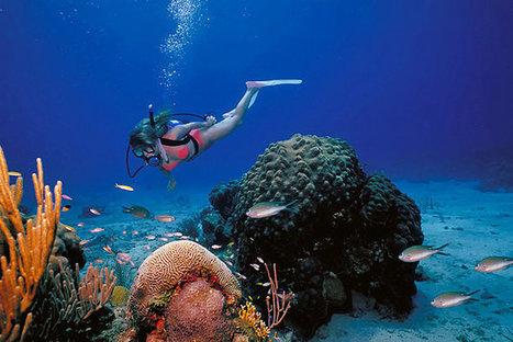 Grab the finest of St John deals this summer | Exotic Virgin Islands | Scoop.it
