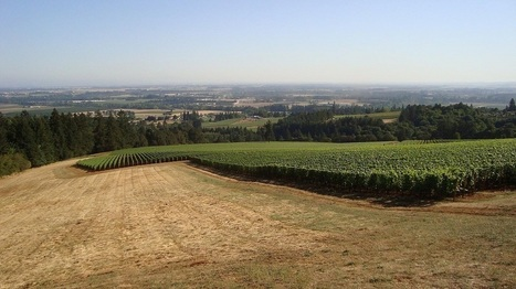 Oregon – Willamette Valley Pinot Noir and more - Wine behind the label | Pinot Post | Scoop.it