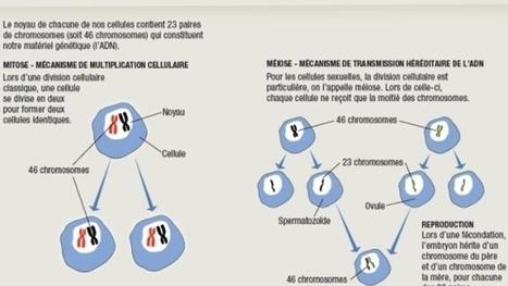 La génétique aide à tracer l'arbre généalogique | Rhit Genealogie | Scoop.it