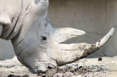 Top tráfico ilegal. Armas, drogas y ¿pieles? | Enriquecimiento ambiental en animales en cautividad y mascotas. | Scoop.it